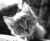 Kitten. Little kitten looks tilted her head with big eyes Stock Image