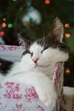 Kitten Stock Image