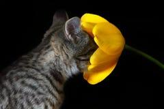 Kitten. Little kitten smells a flower royalty free stock photo