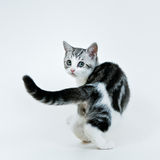 Kitten look back Stock Photo