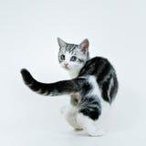 Kitten look back. Little kitten look back for me Stock Photo