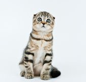 Kitten look at me attentively. Kitten with big round eyes look at me attentively stock photos