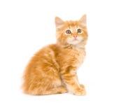 Kitten Looking At Camera Stock Photography