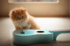 Persian Kitten. Kitten looking with blue Ukulele Stock Images