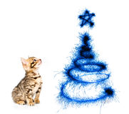 Kitten looking at the Christmas tree on a white Stock Photos