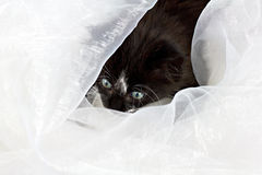 Kitten looking through fabric Stock Photo