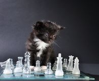 Kitten looking at glass chess board with  pieces Royalty Free Stock Image