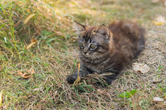 Kitten looking with interest while playing outdoor Royalty Free Stock Images