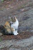 Kitten Looking linda en algo foto de archivo