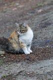 Kitten Looking linda en algo fotos de archivo libres de regalías