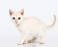 Kitten looking at me. Royalty Free Stock Photos