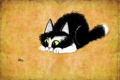 Kitten Looking negra en una mosca Imagen de archivo libre de regalías