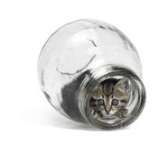 Kitten looking out of a glass bottle Stock Photography