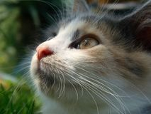 Kitten Looking At The Sky Royaltyfria Foton