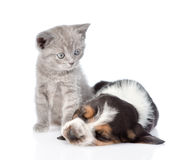 Kitten looking at a sleeping basset hound puppy.  on white Stock Photography