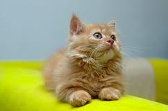 Kitten looking at something stock image