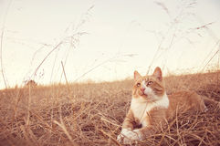 Kitten looking up in field Stock Photography