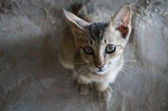 Kitten looking up from sandy floor. Kitten on floor by sandy beach looks up Royalty Free Stock Image