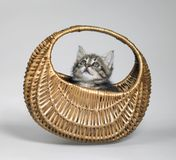 Kitten looking up in small basket Stock Image