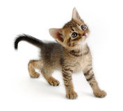 Kitten looking up, very graceful Stock Photo