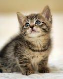 Kitten looking up Stock Photo