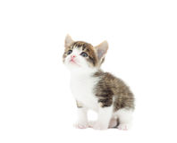 Kitten looking up Royalty Free Stock Photos