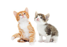 Kitten looking up Royalty Free Stock Photography
