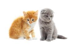 Kitten looking Stock Photo