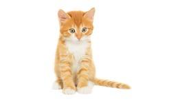 Kitten looking royalty free stock photos