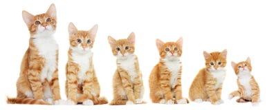 Kitten looking Stock Photos