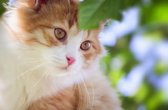 Kitten looks ahead close up. Outdoor Stock Images