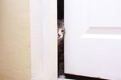 The kitten looks in the half-open door. He wants to enter Royalty Free Stock Photography