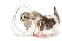 Kitten looks in a mirror Stock Image