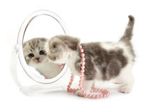 Kitten looks in a mirror Royalty Free Stock Photo