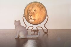 Kitten looks in the mirror and sees himself reflected like a lion. Self-confidence concept. Business or personal growth