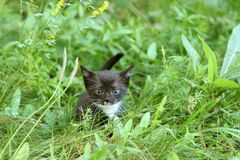 The kitten looks for mother Royalty Free Stock Images