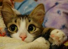 The kitten looks. Pets cat animals little Stock Photography