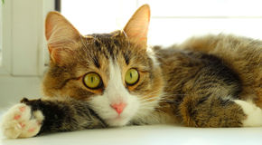 The kitten looks. Pets cat animals recreation Royalty Free Stock Photography