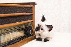 Kitten looks after the radio with a curiosity and interest Royalty Free Stock Image