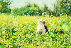 Kitten looks on soap bubbles Stock Photo