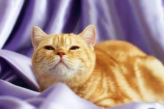 The kitten looks up Royalty Free Stock Photos