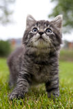 Kitten looks up Stock Images