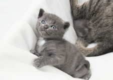 Kitten looks upwards Stock Photos