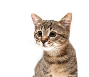 Kitten looks on white background Royalty Free Stock Photo