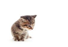 Kitten looks Royalty Free Stock Photography