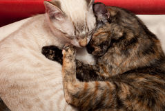Kitten love royalty free stock images
