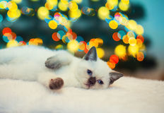 Kitten lying against Christmas tree with lights Stock Photo