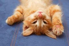 Kitten lying on the back Royalty Free Stock Photo