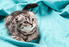 Kitten lying on the bed Royalty Free Stock Photos