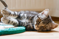 Kitten Lying On A Floor Stock Photos